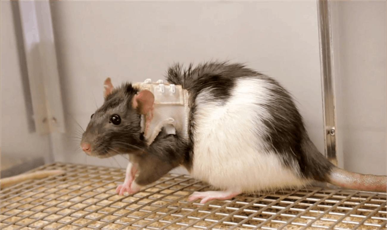 Sexual Science, Psychology Studies, Rat Psychology