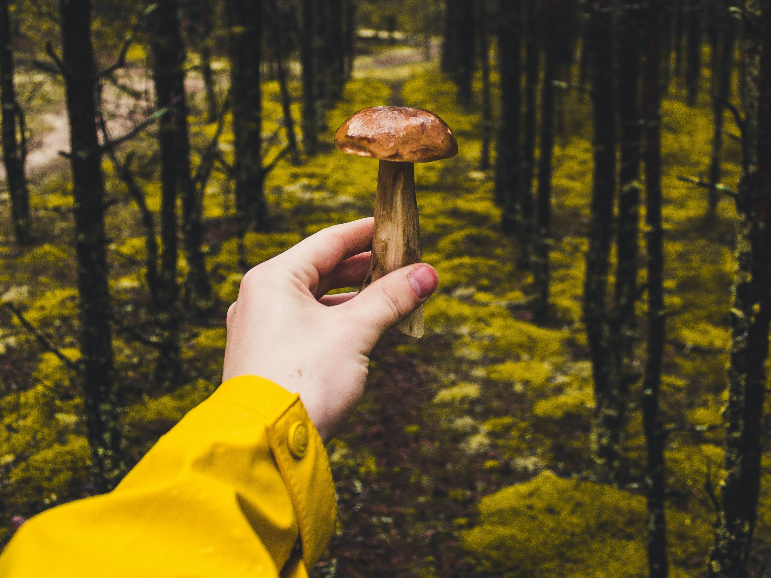Psychedelics and Virtual Reality Make a Trendy but Illegal Therapy