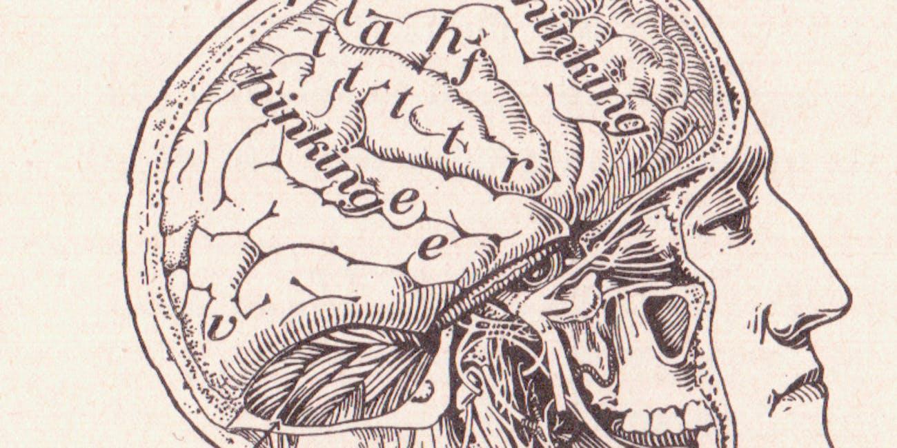 pg 226 Our Brain