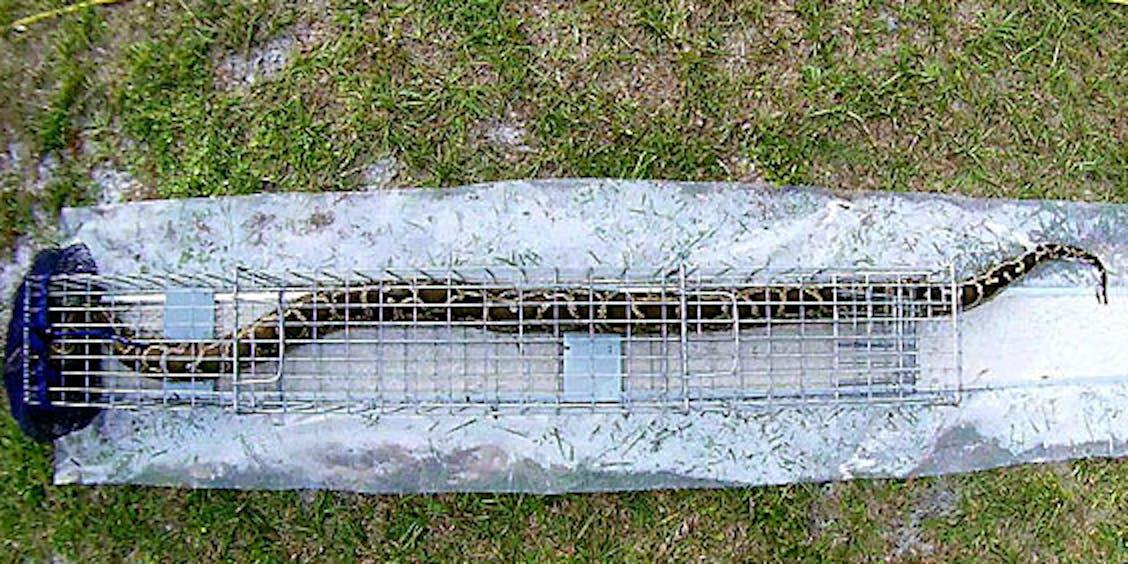 python trap