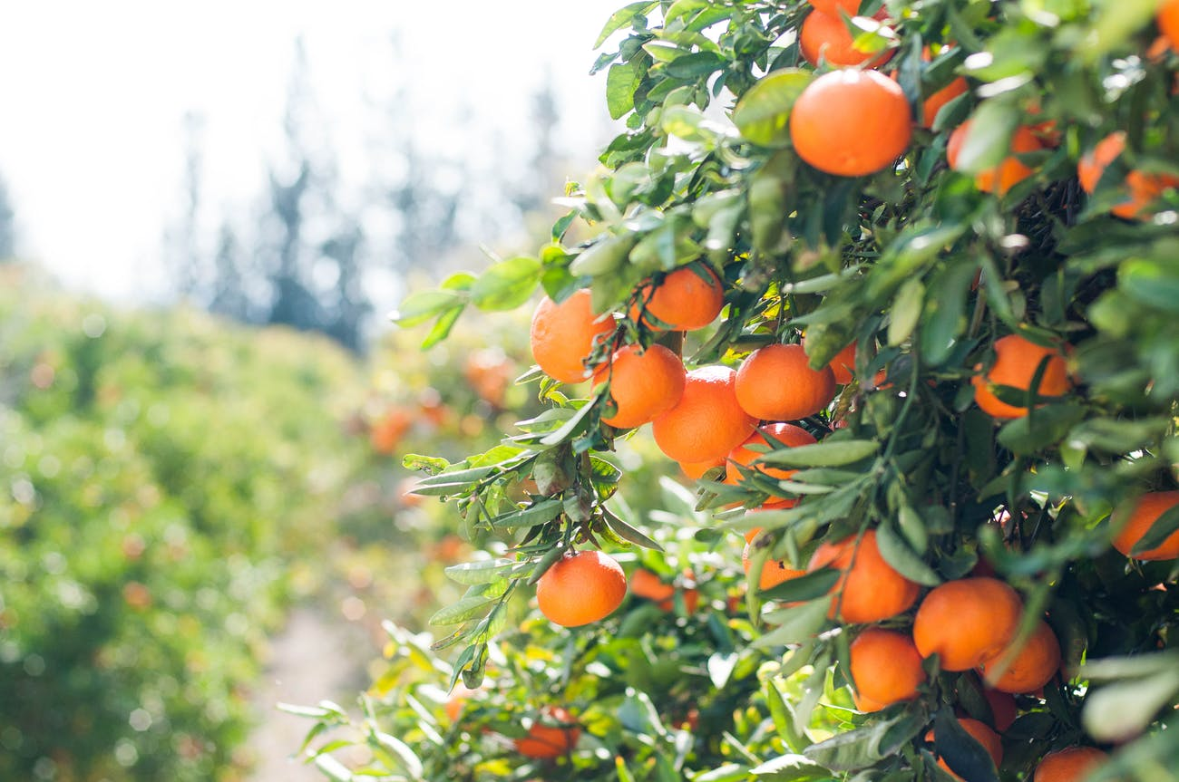 A change in food production could help power this radical change.