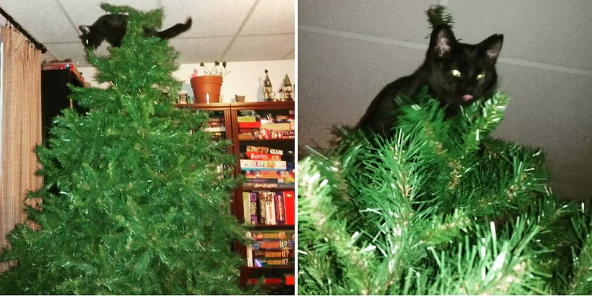 Why Do Cats Like Christmas Trees? A Scientist Explains