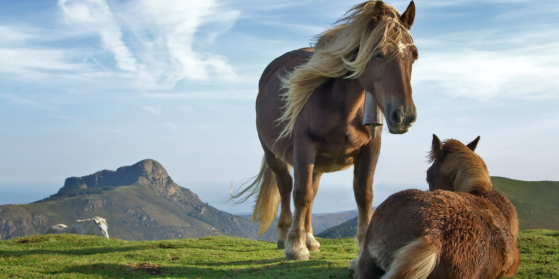 Why Horses Evolved to Have Only One Toe