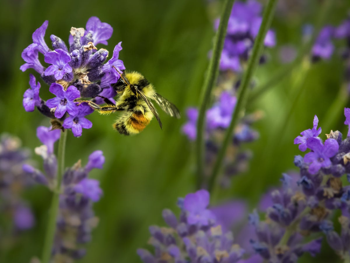 Bees Are Disappearing. Shop Bee-Related Goods to Keep 'Em Around.