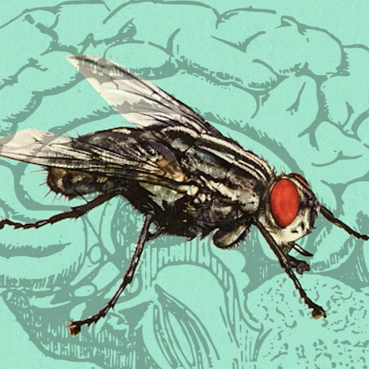 Fly sex study may unlock the secret to maintaining long-term memories