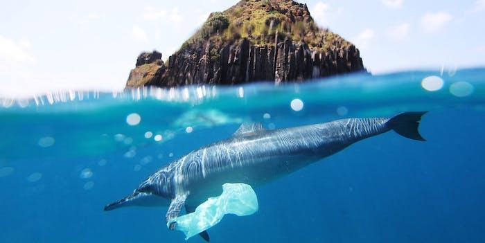 dolphin, ocean, plastic