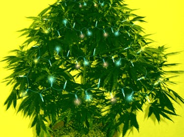 8 States Where It's Legal to Gift Weed for Christmas