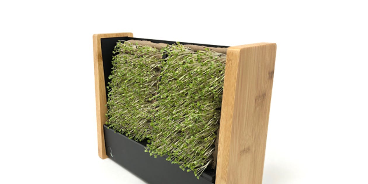 EcoQube Frame + Seed Packs