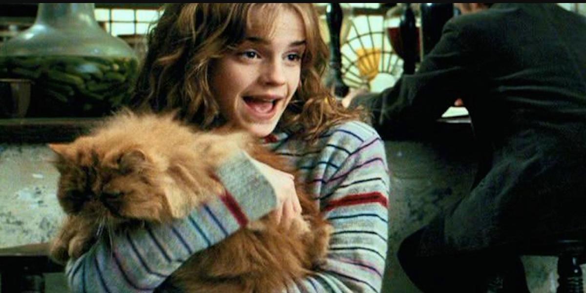 I Was A Cruella de Vil, Repent ! : Muezza, Sagwa ...  |Harry Potter Hermione And Crookshanks