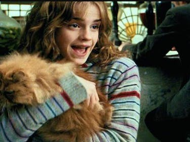 Emma Watson and Crookshanks in Harry Potter