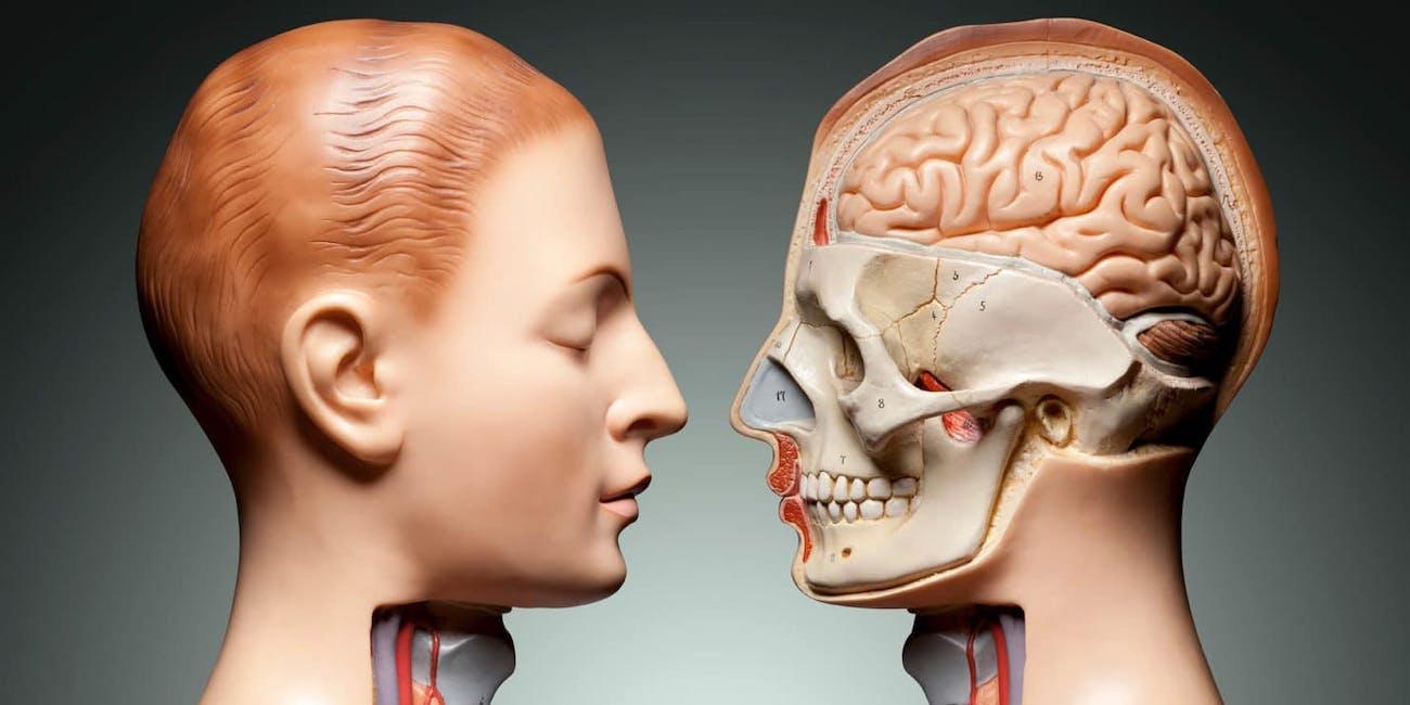 Anatomy of Human Face
