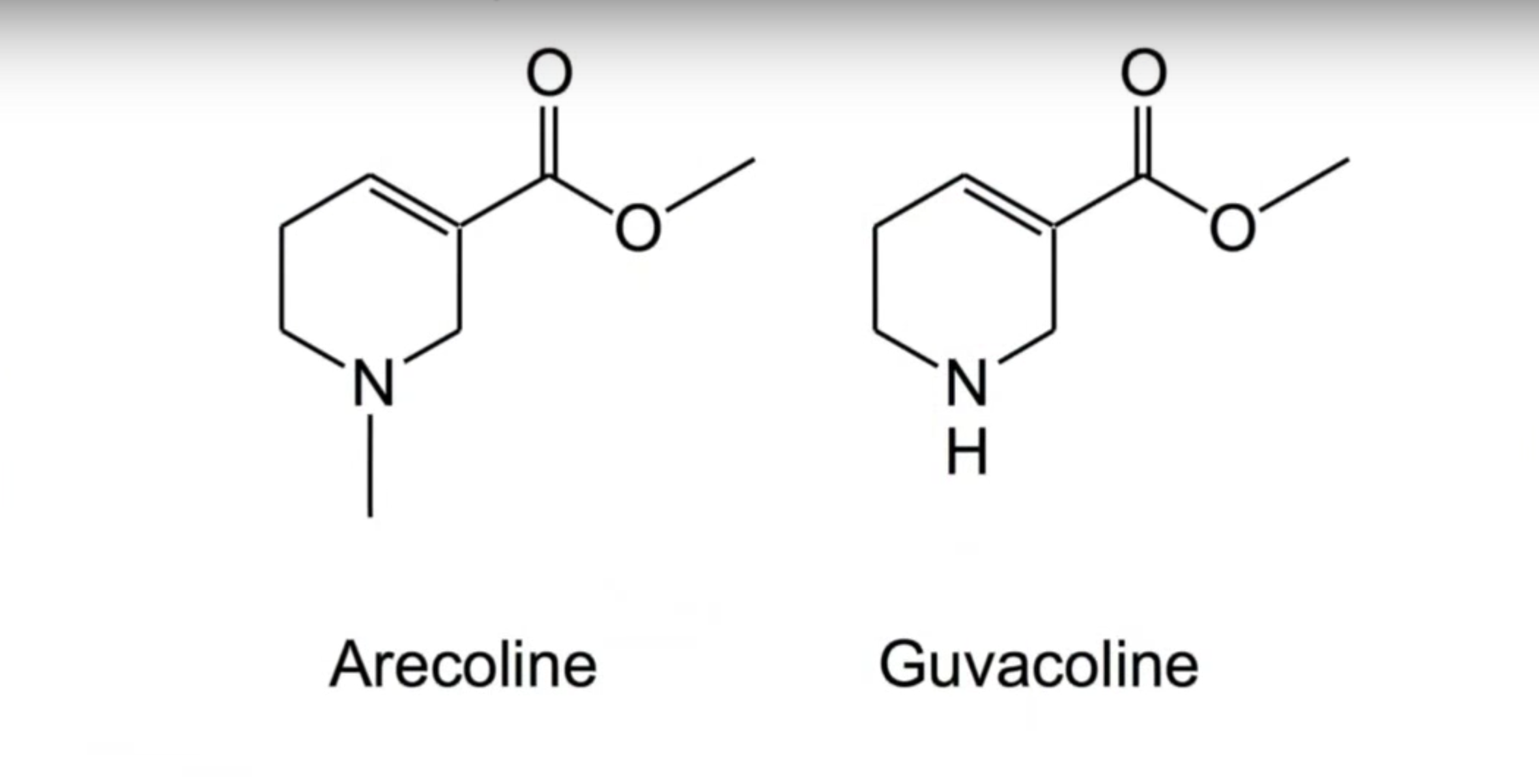 Arecoline and Guvacoline are two of the alkaloid molecules in areca nuts that could show scientists better ways to help people quit smoking.