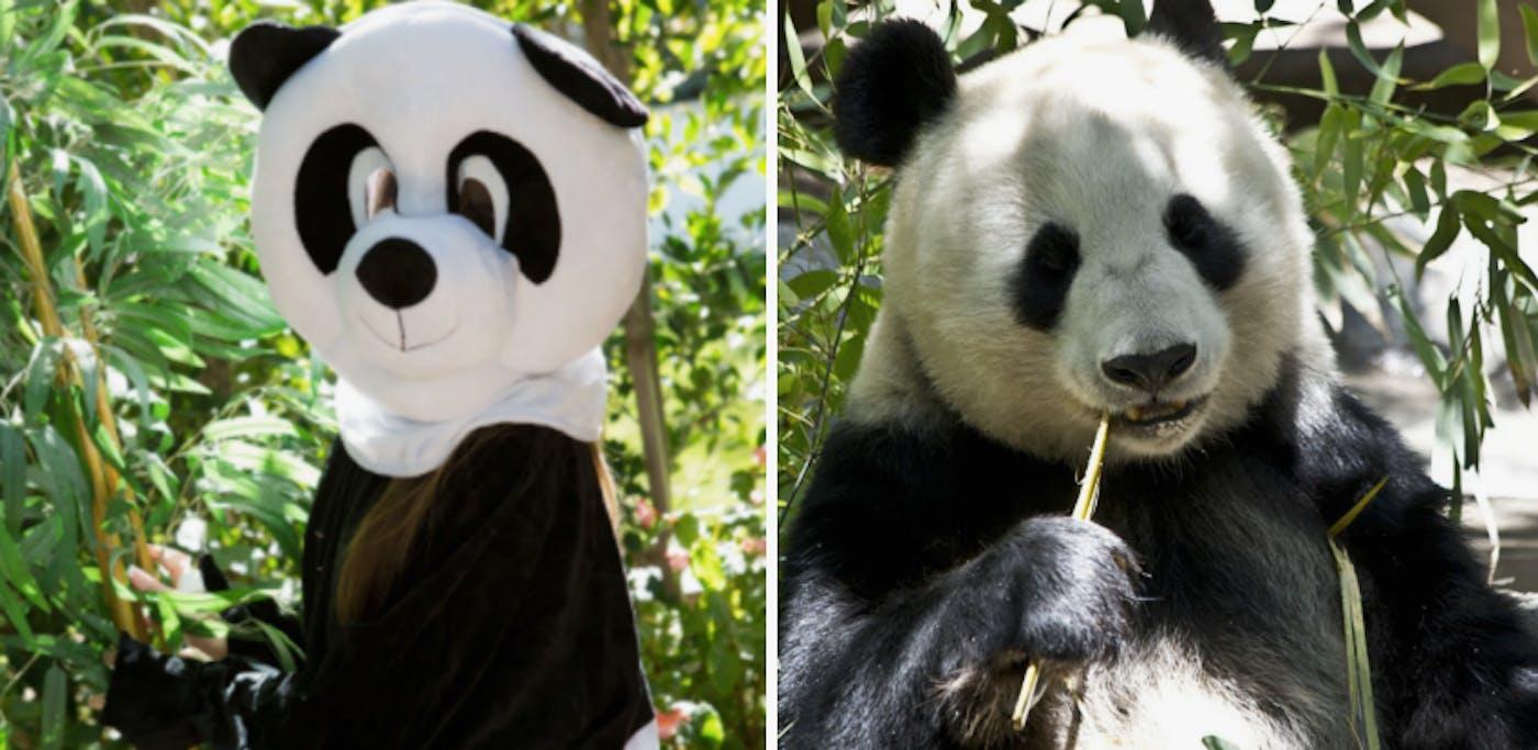 Animal Dress Up Porn pornhub requests public help to save pandas with bear porn