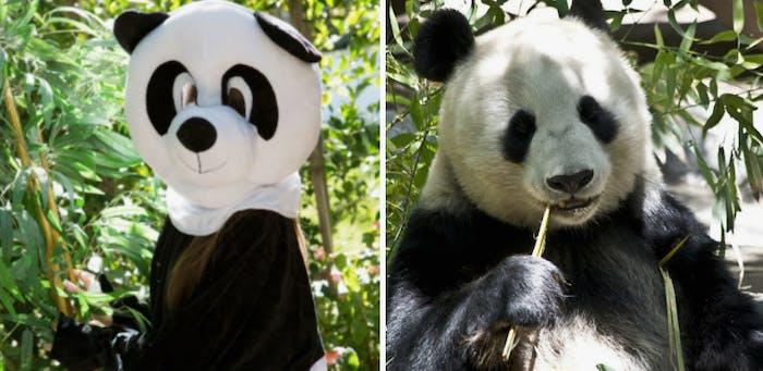 PornHub wants you to dress like a panda and do it.