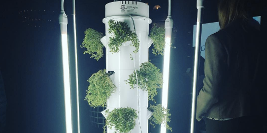 Aeroponics Why Vertical Towers Are The Waterless Future