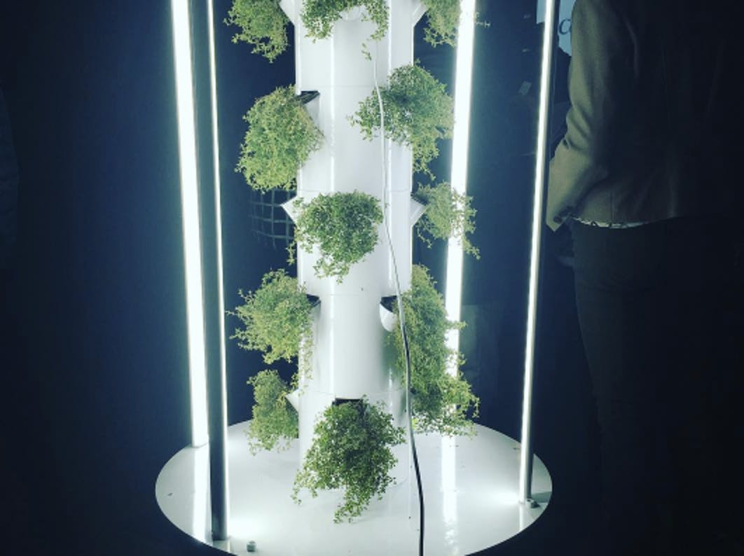 Aeroponics Why Vertical Towers Are The Waterless Future Of