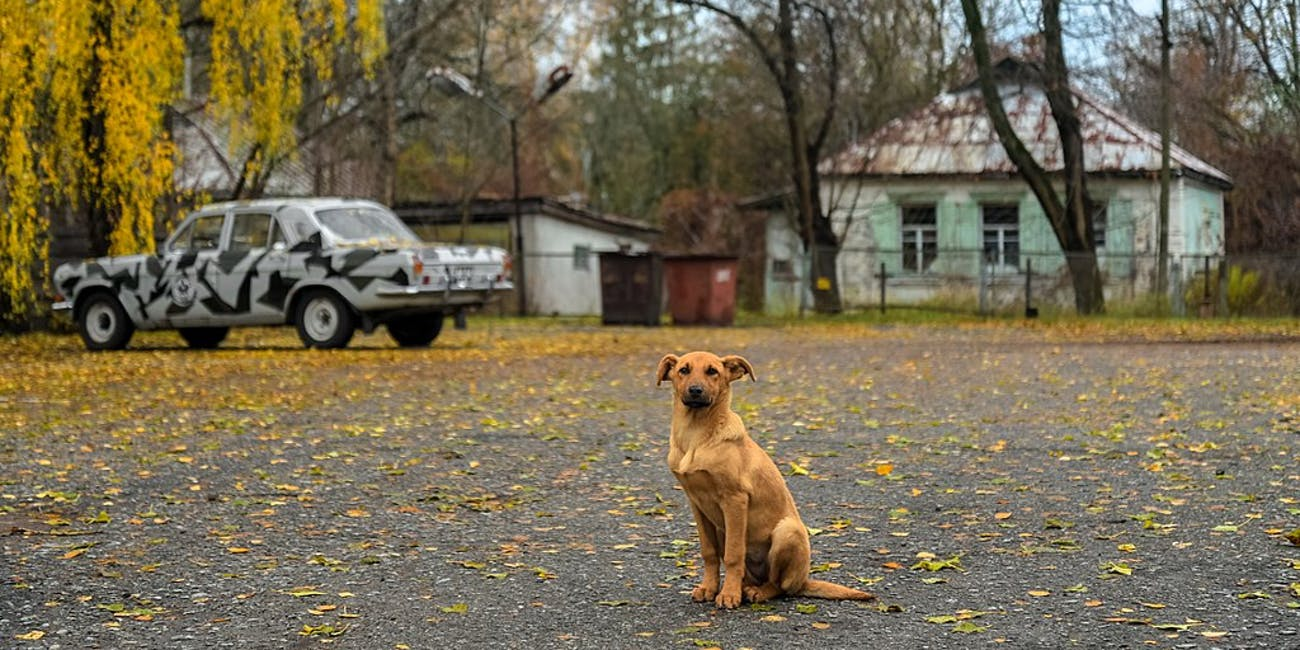 Chernobyl Has Become a Refuge for Wildlife 33 Years After Nuclear Accident