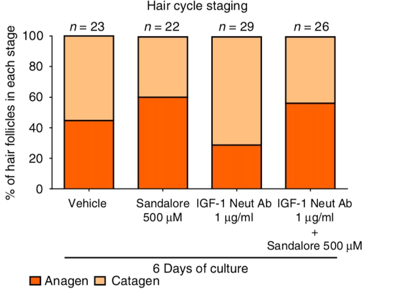 hair cycle growth baldness sandalwood