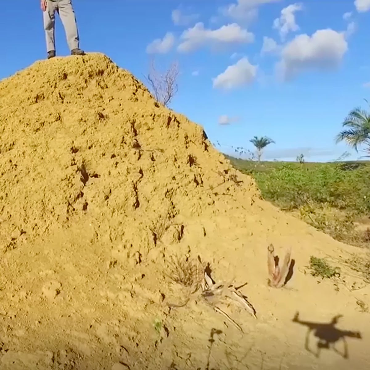 Aerial Video Shows Ancient Termite Mound Network the Size of Great Britain