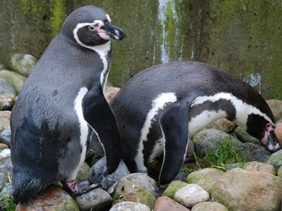5 Mind-Blowing Penguin Stories to Celebrate World Penguin Day