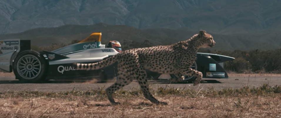Natureu0027s Fastest Kitty Vs. Super Fast Electric Car: Which Cheetah Will Win?