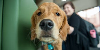 Dogs, therapy dogs