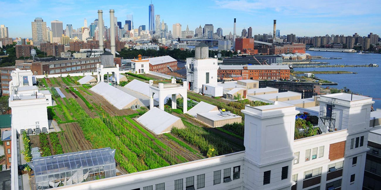 Green roof, rooftop farming
