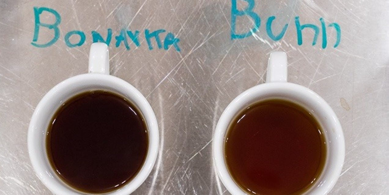 Coffee brewed in the Bonavita was delicious and well-rounded, whereas coffee from the Bunn was visibly under-extracted.
