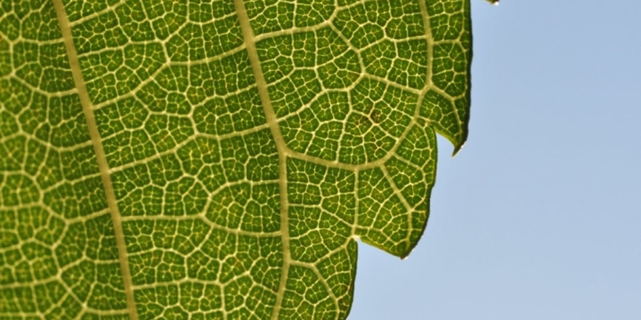 artificial photosynthesis geoengineering carbon dioxide reverse climate change