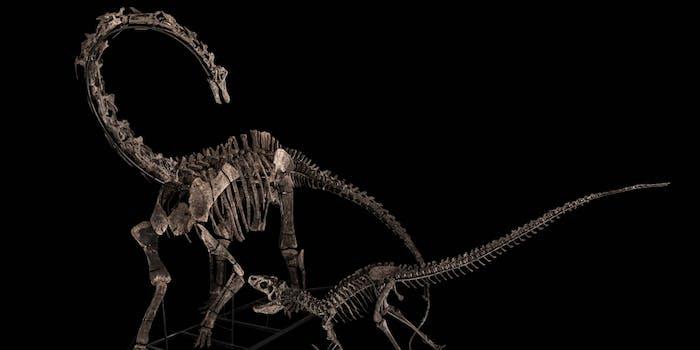 allosaurus and diplodocus