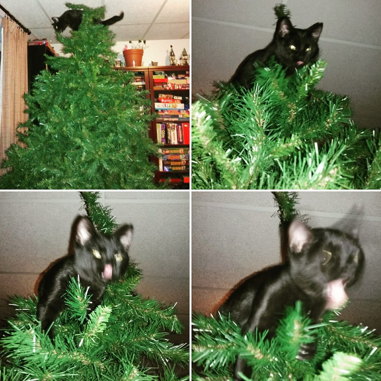Why Do Cats Like Christmas Trees A Scientist Explains Inverse