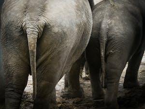 physics elephant human defecation poop