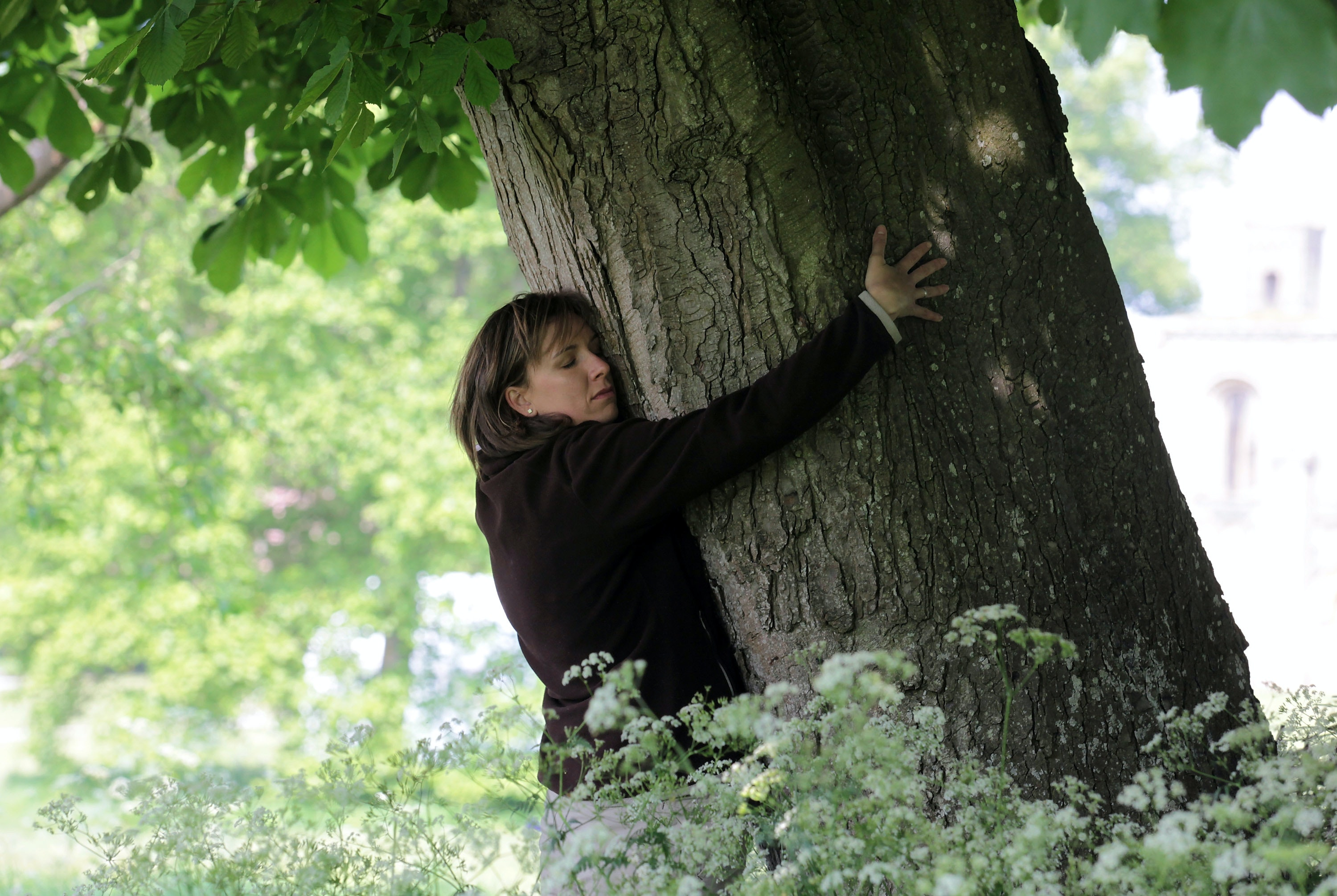 Having a sexual attraction to trees