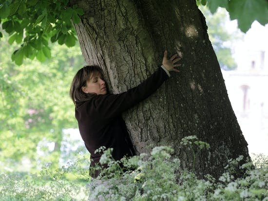 When Tree Hugging Leads to Heavy Petting: An Introduction to Dendrophilia
