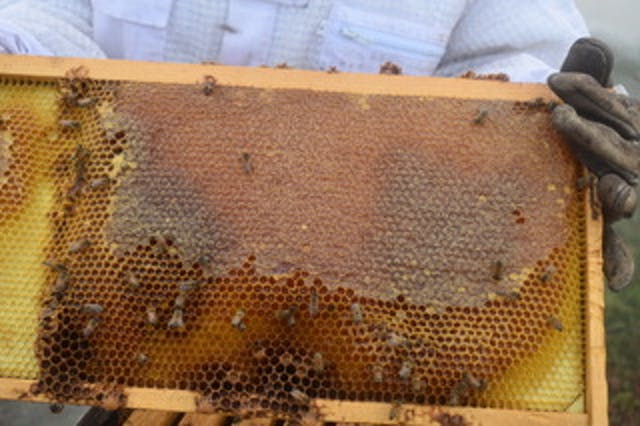 Varun Madan took regular honey measurements to see how healthy his hives were.