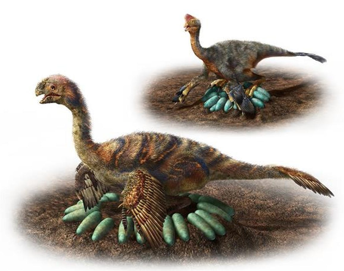 Oviraptorosaur, dinosaur eggs