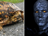 Now Humans Can Control Cyborg Turtles With Their Minds
