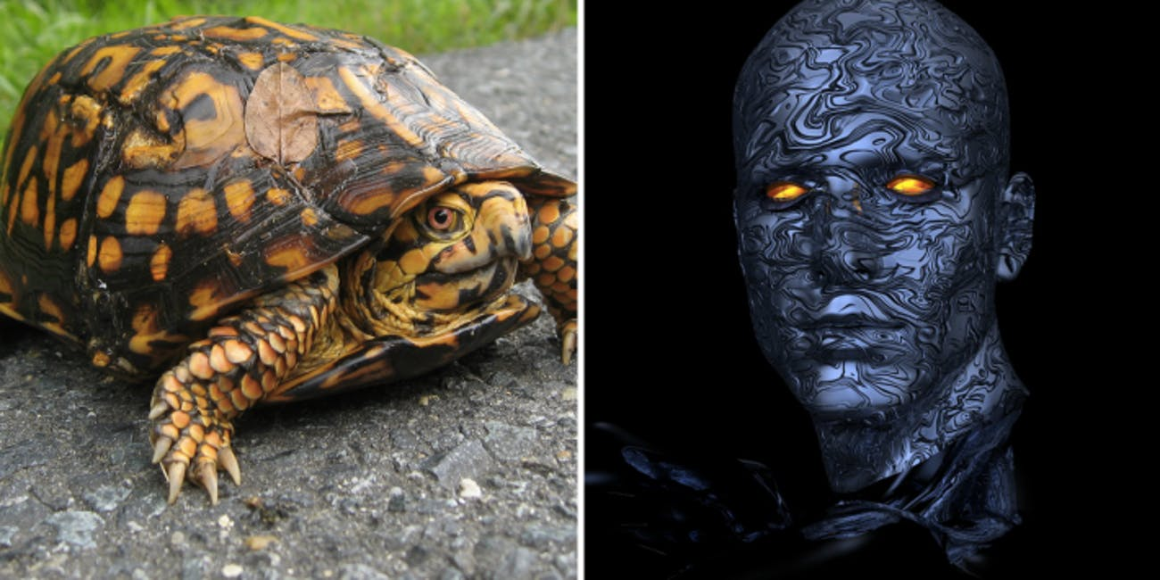With bionic engineering a turtle can be controlled by a human braing.