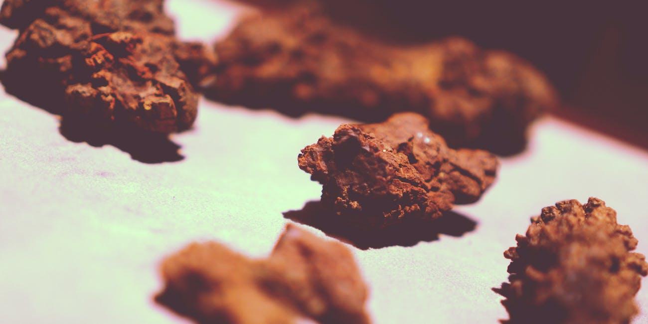 dinosaur poop fossil coprolite