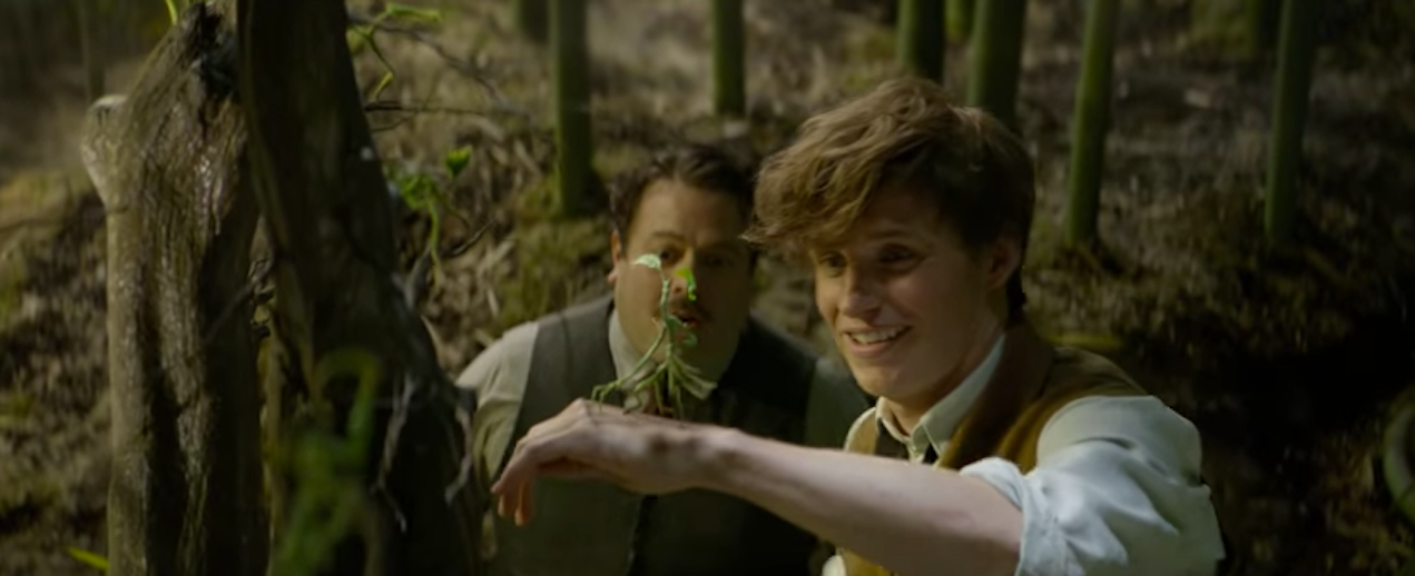 A Bowtruckle in 'Fantastic Beasts and Where to Find Them'