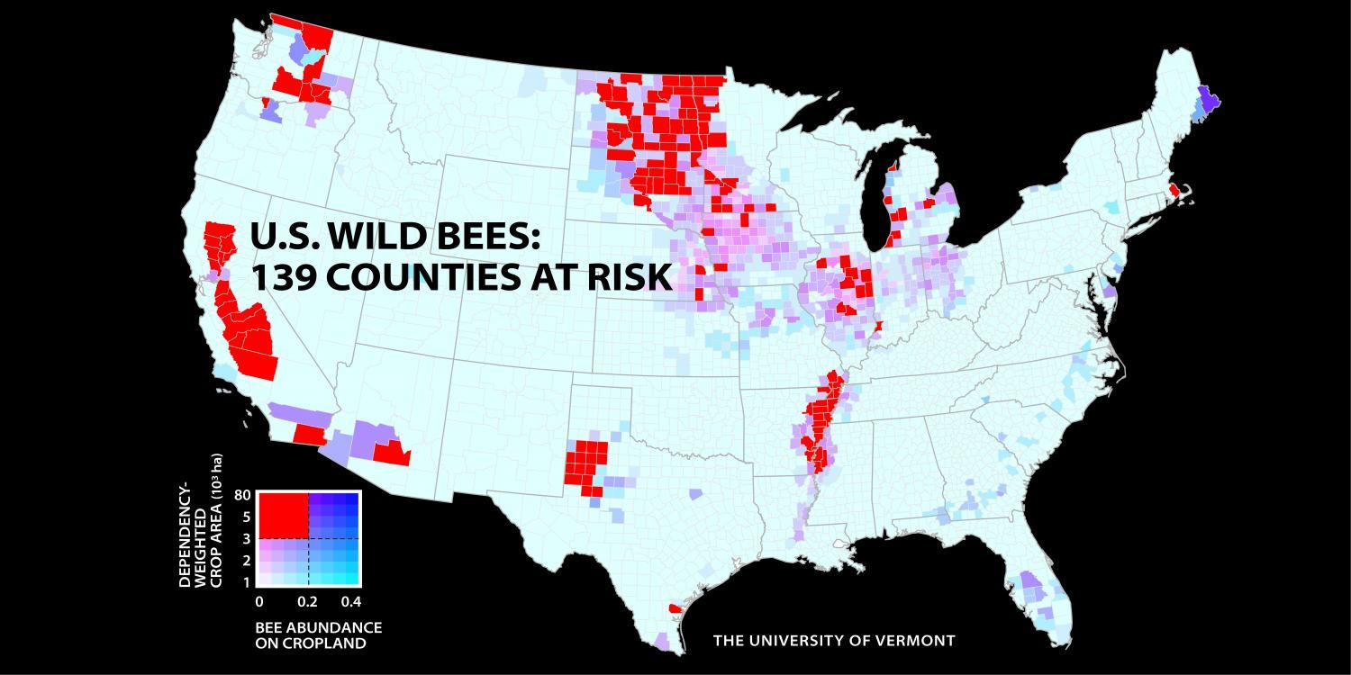 Red zones show where wild bee populations are declining while demand for them rises.