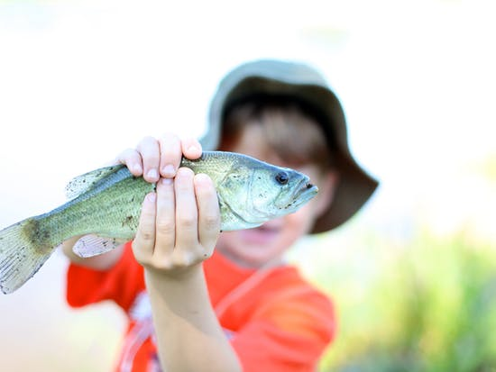 Clever Fish May Laugh at Your Pathetic Fishing Lures