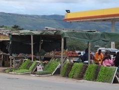 A roadside food market in South Africa.