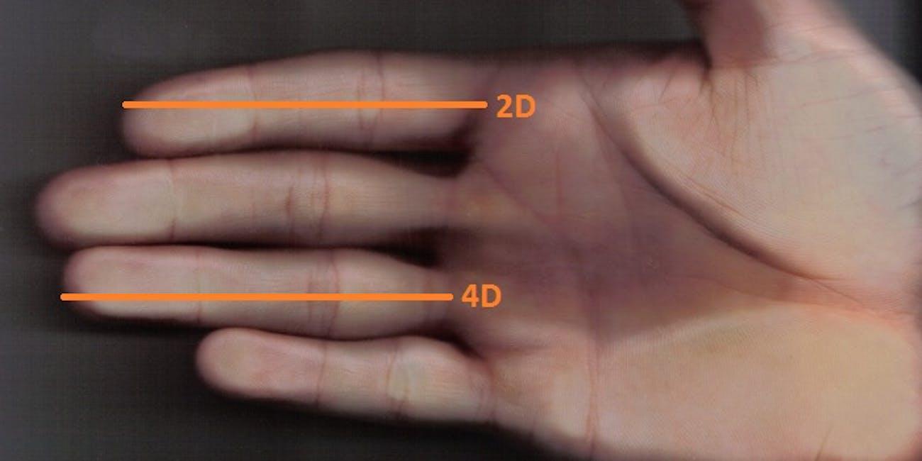 finger ratio
