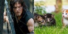 Norman Reedus Teases Death and Kittens for 'Walking Dead' Finale