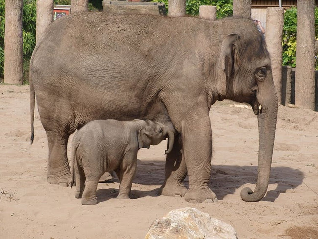 Elephants are known to have strong bonds and mourn for their dead.