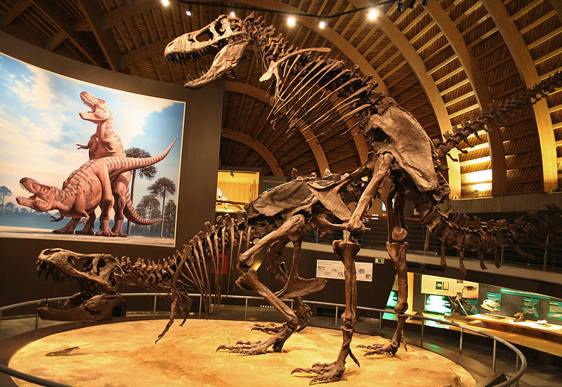 Skeleton casts of Tyrannosaurus mounted in a mating position at the Jurassic Museum of Asturias.