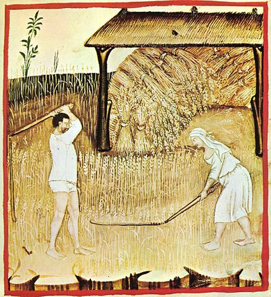 A 14th century representation of grain harvesting.