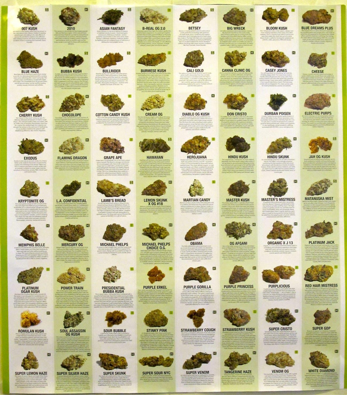 medical marijuana : strains and varieties