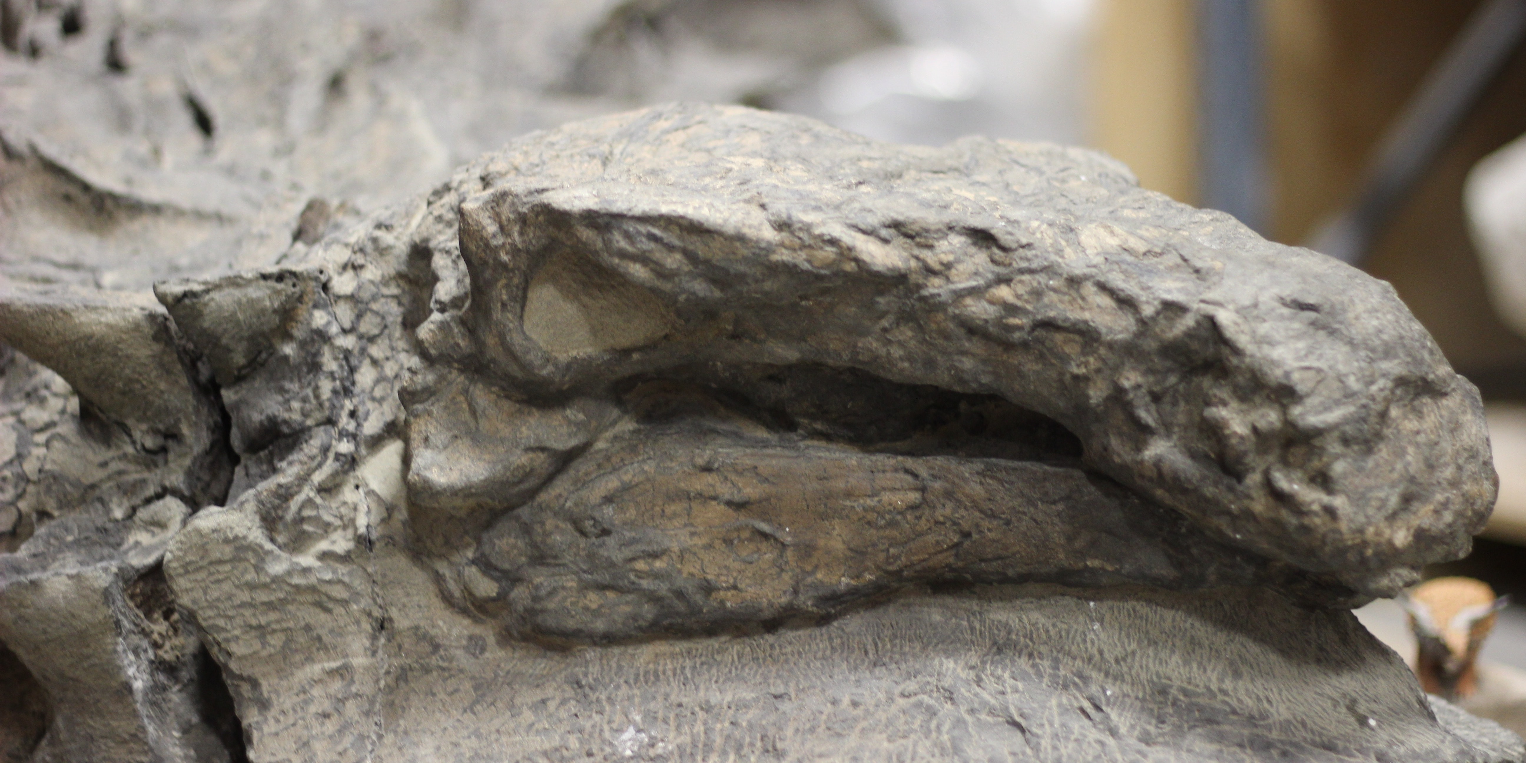 This Perfectly Preserved Dinosaur Is One in a Billion